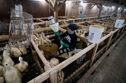 US-LIFESTYLE-ANIMAL-FOOD