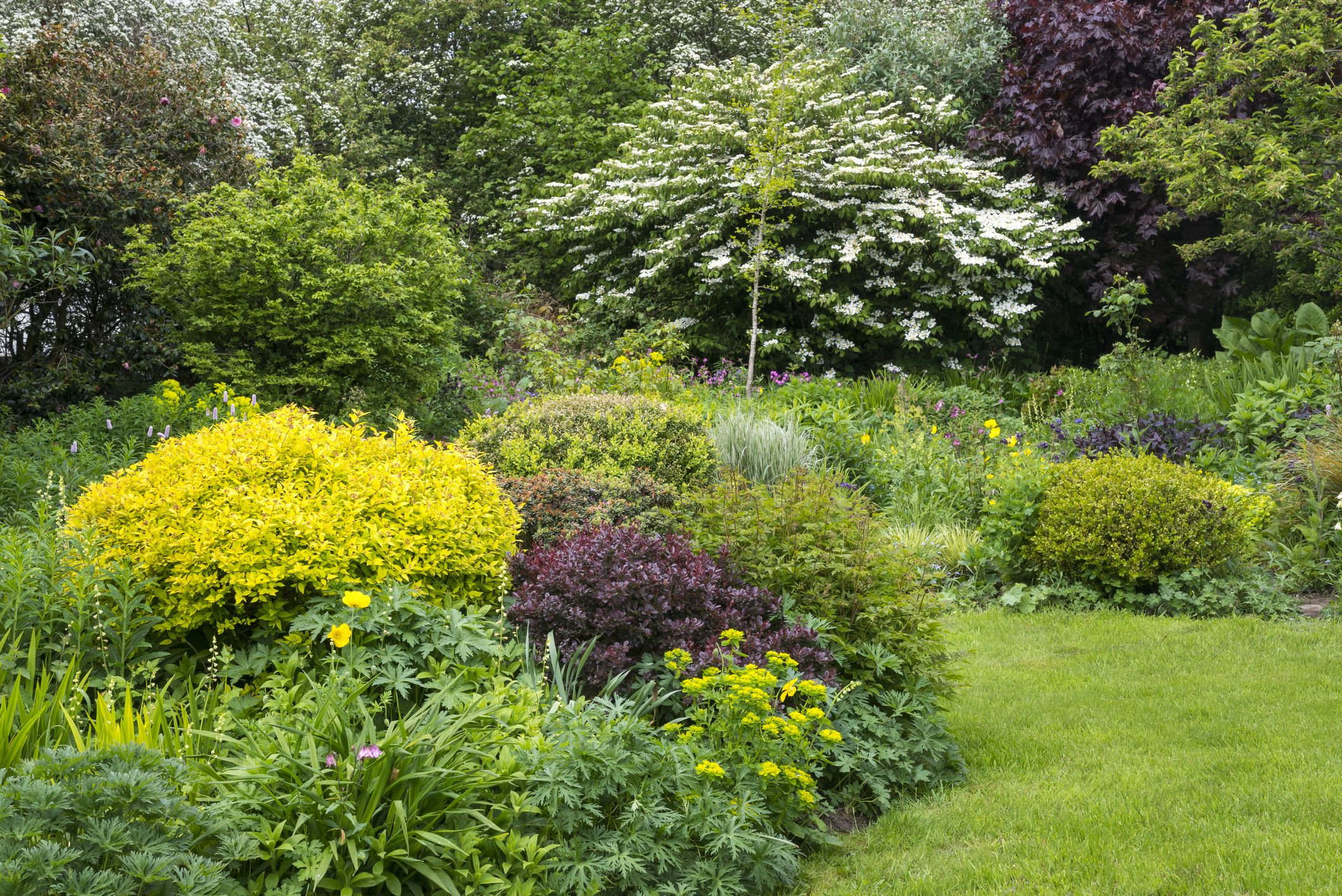 10 Best Trees For Small Gardens Best Small Trees For Tiny Yards