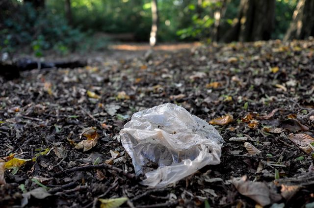 world clean up day plastic in het bos