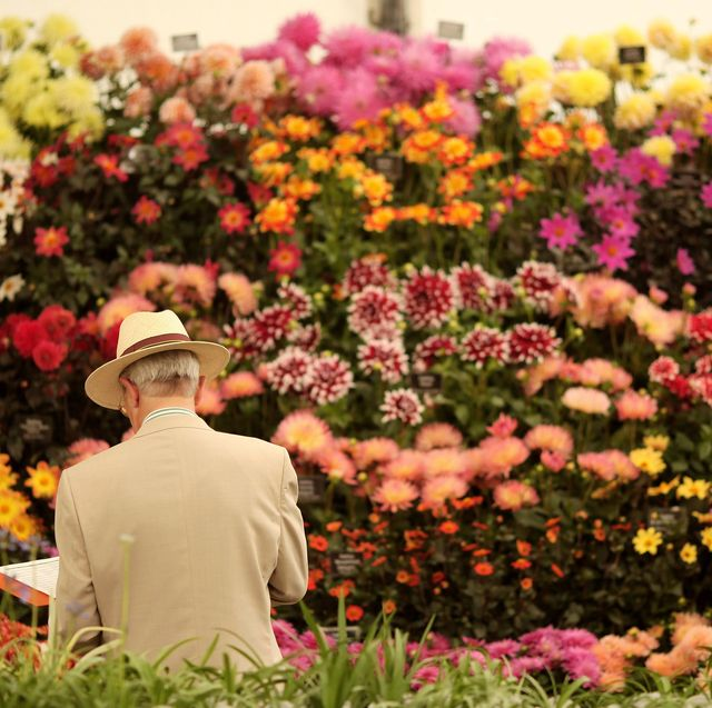 rhs confirms that 2 major flower shows will go ahead this summer