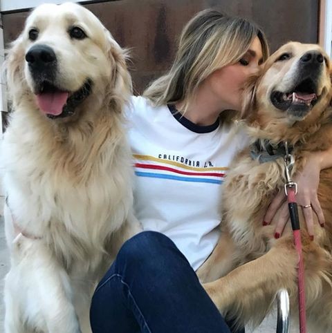 Dog, Mammal, Vertebrate, Dog breed, Canidae, Carnivore, Golden retriever, Companion dog, Retriever, Sporting Group,