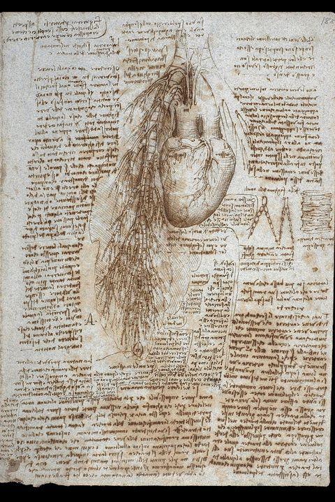 study of heart by leonardo