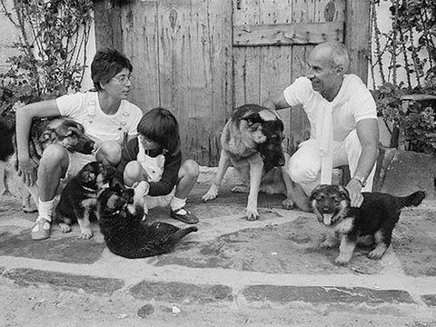 Human, Dog breed, Vertebrate, Mammal, Carnivore, Dog, Companion dog, Canidae, Lap, Sporting Group,