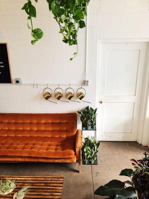 """10 """"piante da bagno"""" perfette per appartamenti deliziosi e pollici verdi scarsissimi"""