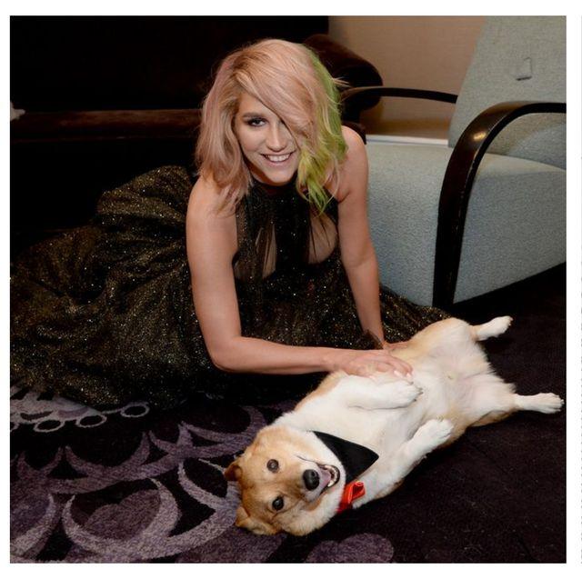 Canidae, Skin, Dog, Fur, Companion dog, Fashion, French bulldog, Human, Ear, Dog breed,