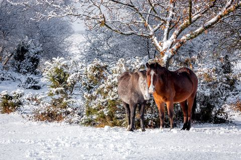 animals in snow uk