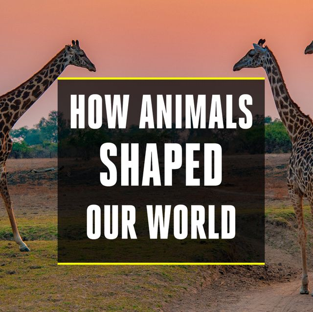 how animals shaped our world