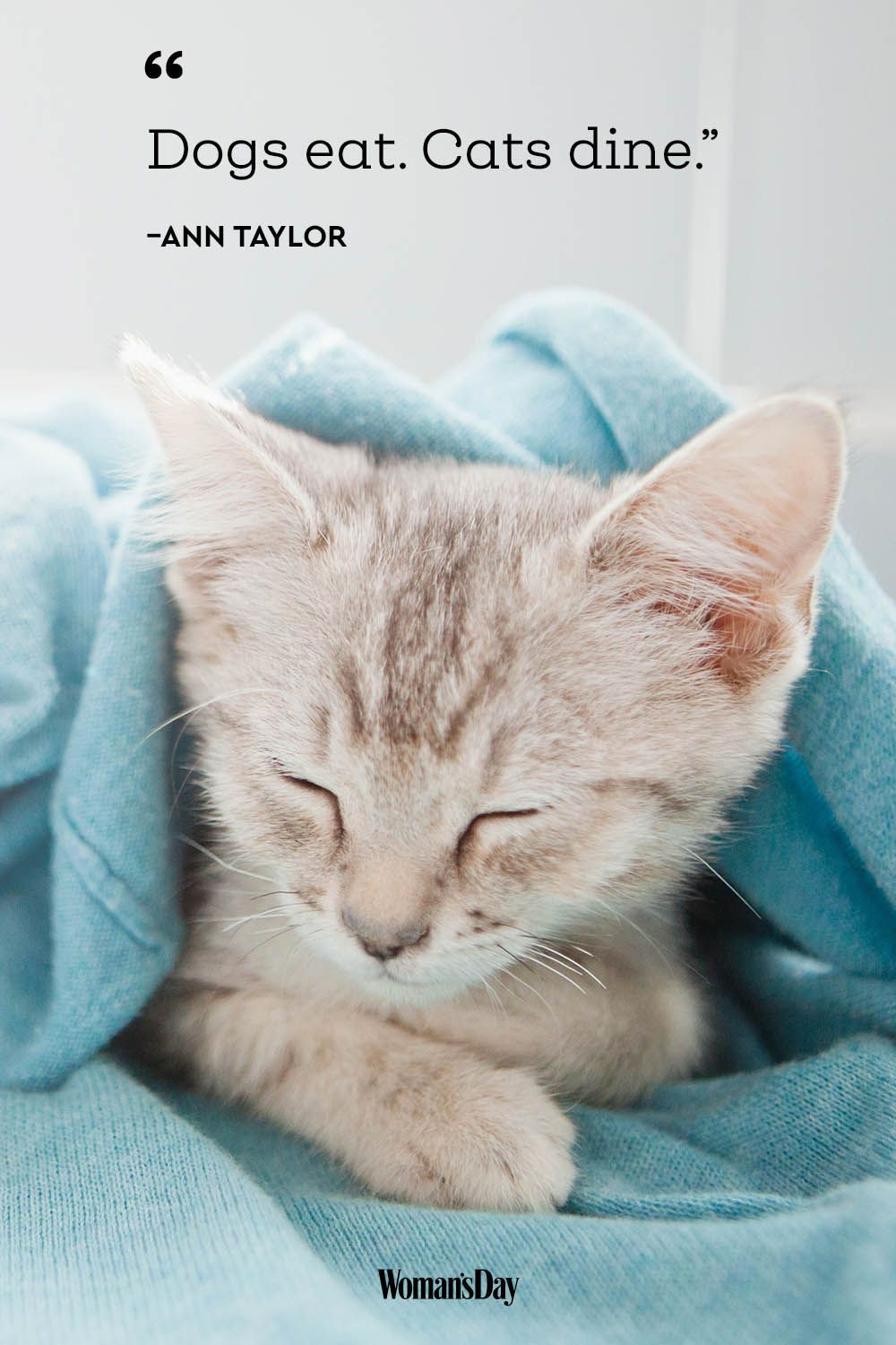 cat quotes - Ann Taylor