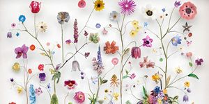 Anne ten Donkelaar artista cuadros flores