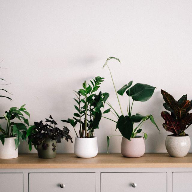 houseplants uk
