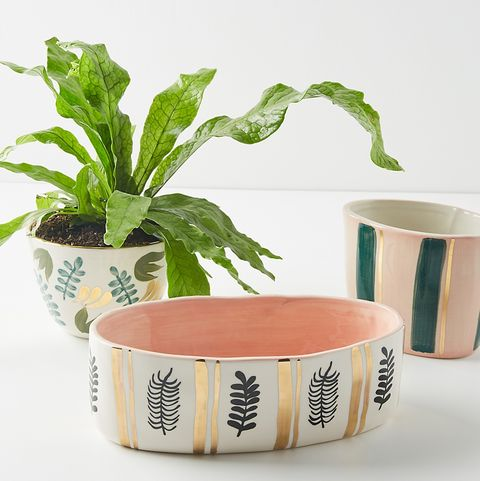 a fern and three hand-painted planters from anthropologie