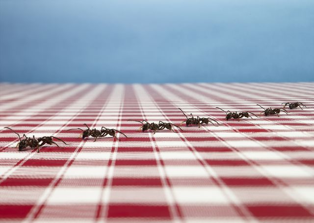 ants on table