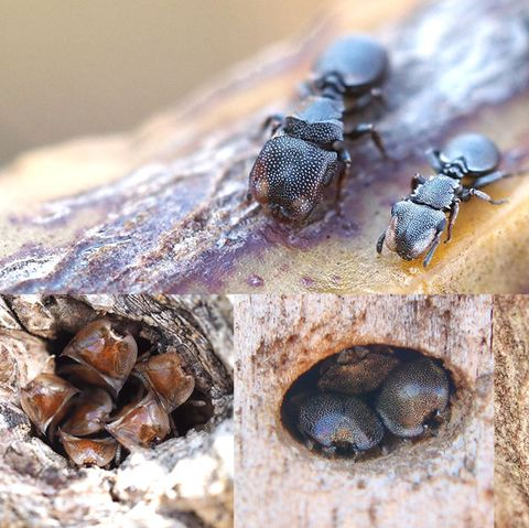 Insect, Carpenter ant, Pest, Membrane-winged insect, Invertebrate, Close-up, Macro photography, Bee, Parasite, blowflies,