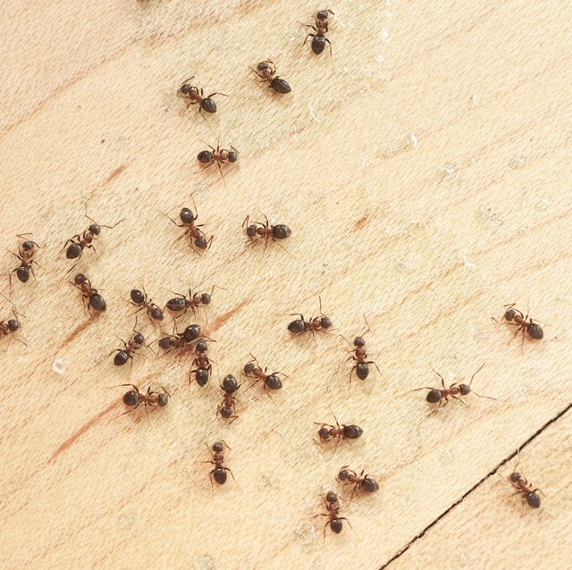 How To Get Rid Of Ants 20 Ways To Get Rid Of Ants Naturally