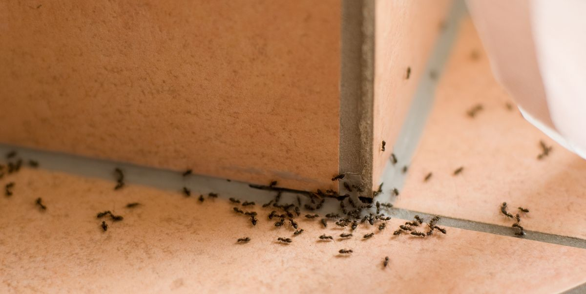 How to Get Rid of Ants in Your Home for Good, According to Bug Experts