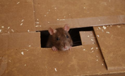Does Your Car Have Wiring That Rodents Think Is Tasty? | News | Car