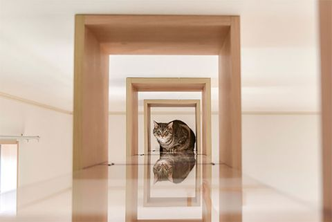 日本貓咪公寓「貓之屋」室內設計