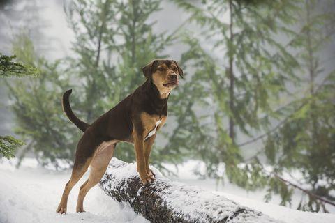 alimentación de perros en invierno