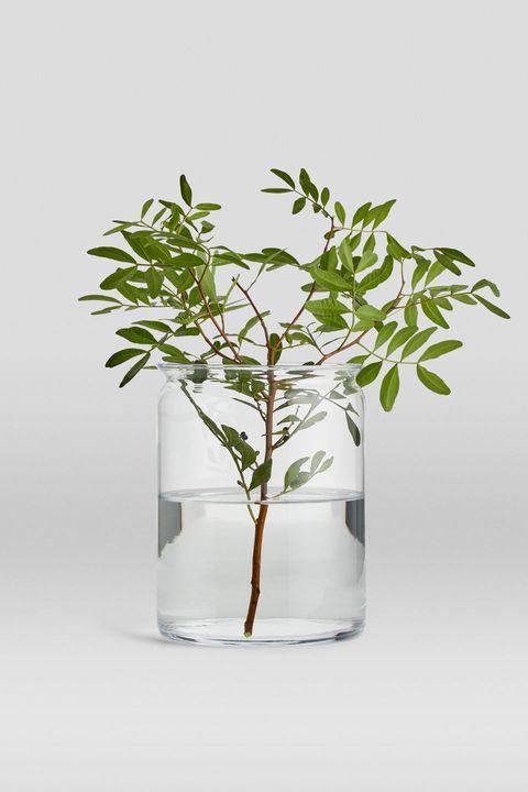 Flowerpot, Plant, Leaf, Flower, Branch, Tree, Botany, Houseplant, Plant stem, Twig,
