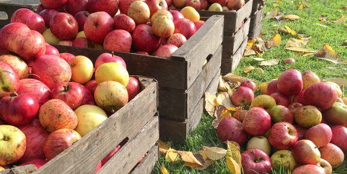 The 50 Best Apple Picking Spots In America
