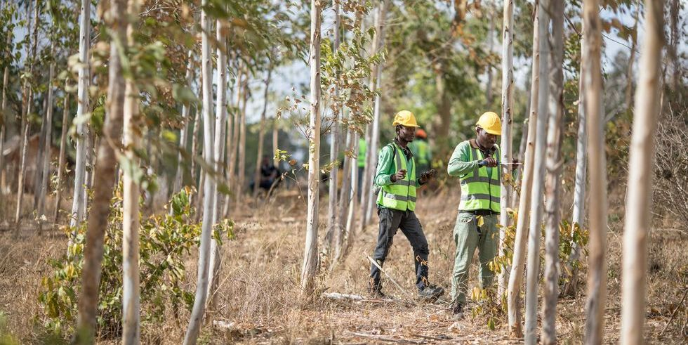 Apple launches Restore Fund |  Afforestation and Carbon Removal