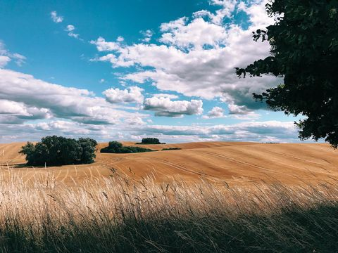 Sky, Natural landscape, Cloud, Nature, Field, Grassland, Grass, Natural environment, Blue, Tree,