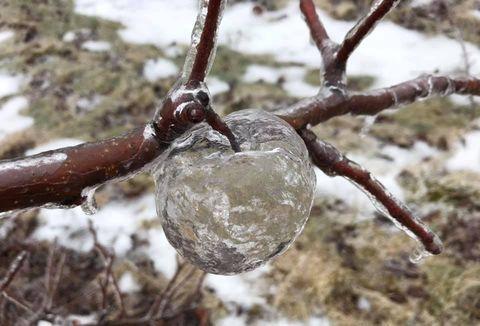Freezing, Tree, Branch, Plant, Twig, Winter, Ice,