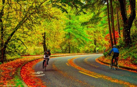 Cyclists in the fall.