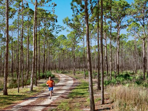 Tate's Hell State Forest, Florida