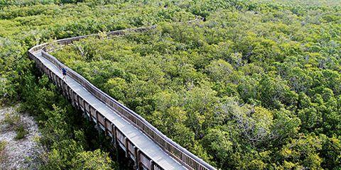 Vegetation, Nature, Plant community, Bridge, Groundcover, Plantation, Field, Shrub, Overpass, Nonbuilding structure,