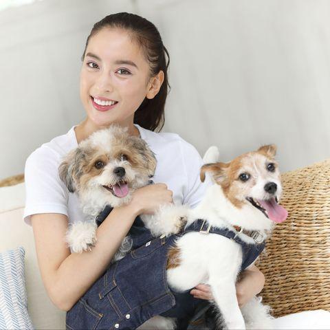 Mammal, Dog, Vertebrate, Canidae, Puppy, Companion dog, Dog breed, Puppy love, Skin, Cavachon,