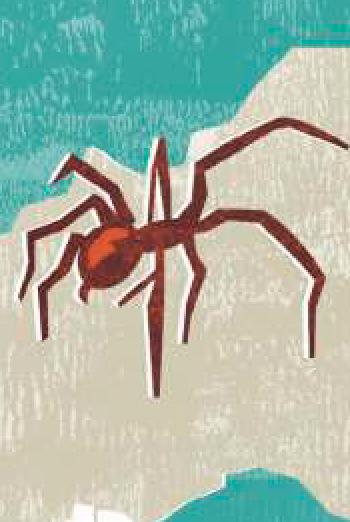 peligros, araña, verano
