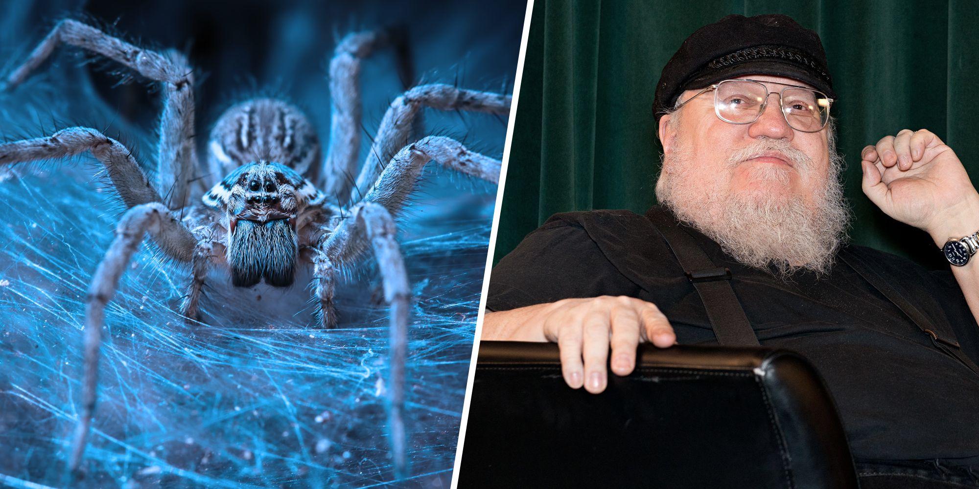 Arañas del hielo George R R Martin Juego de tronos