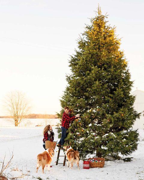 Montad el árbol de Navidad