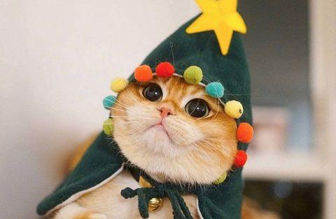 Ideas Árboles de Navidad Instagram