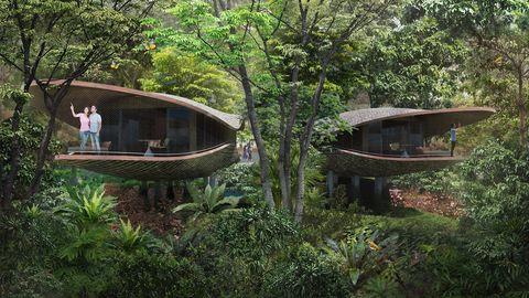 Nature reserve, Tree, Jungle, Botany, Forest, Rainforest, Landscape, Plant, Tree house, Leisure,