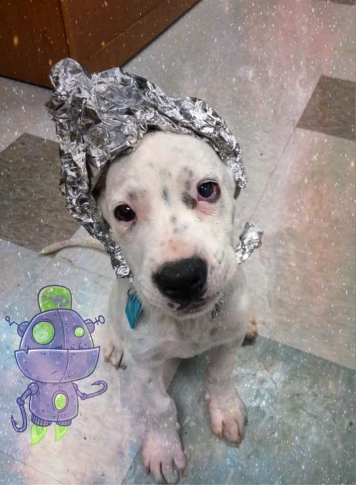 This Animal Shelter Had a 'Storm the Shelter' Event, and Dressed Dogs as Aliens