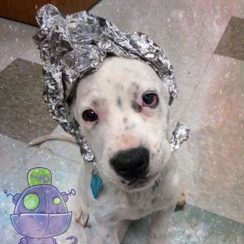 Area 51 Event Animal Shelter Dogs Dressed as Aliens