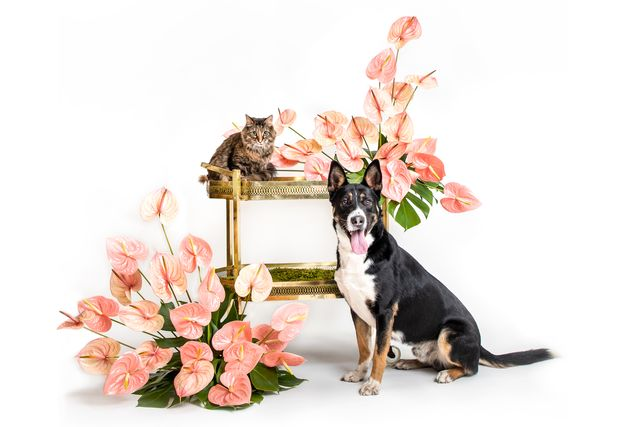 christies animal rescue fund charity auction 2021