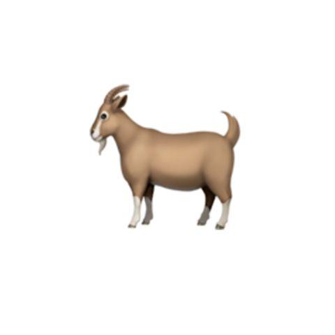 Vertebrate, Goats, Mammal, Goat, Goat-antelope, Cow-goat family, Livestock, Wildlife, Horn, Clip art,
