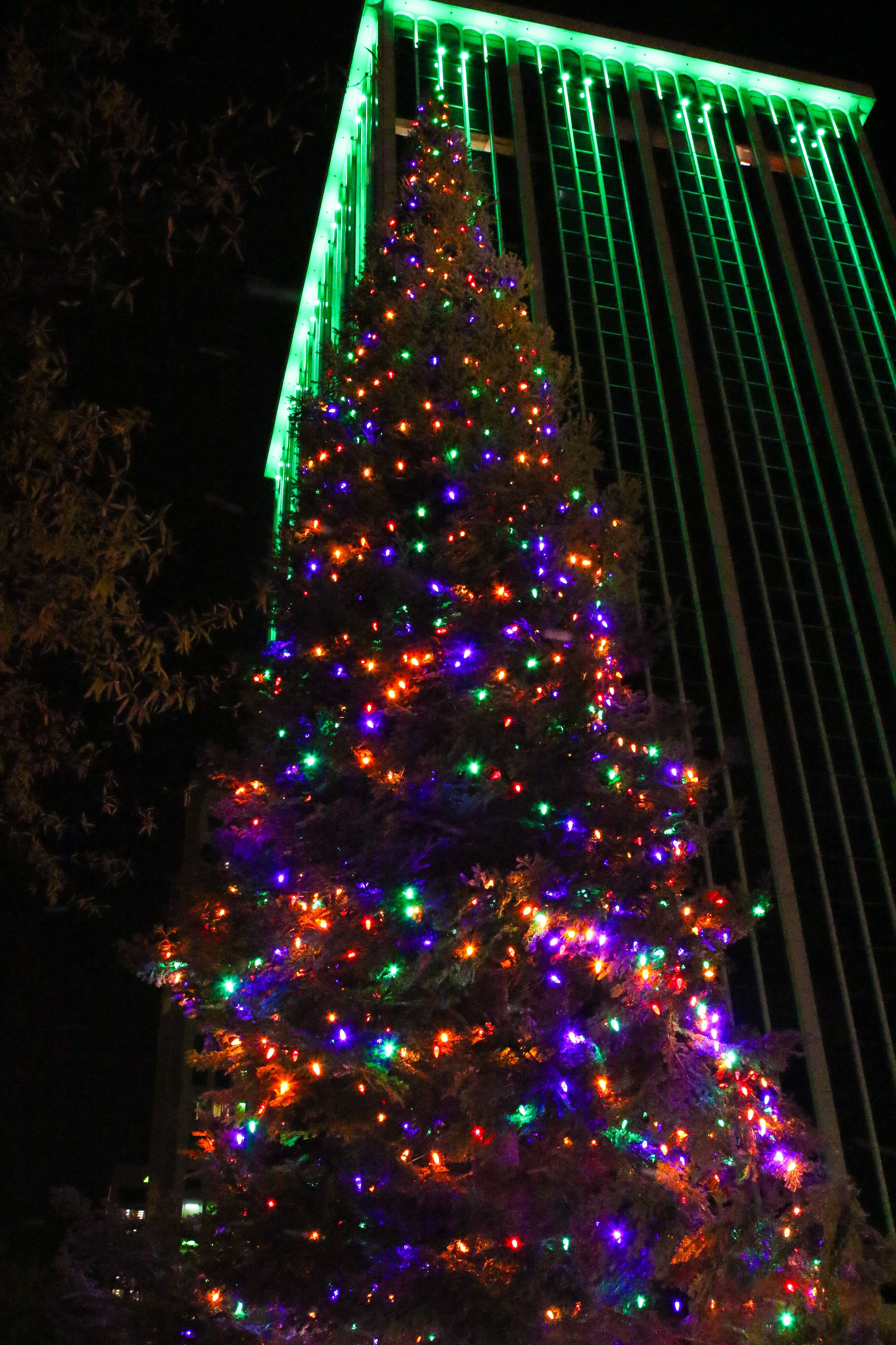 Iconic Christmas Trees in Every State - Best Christmas Trees Near Me