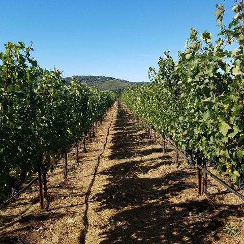 Tree, Agriculture, Plant, Vineyard, Crop, Chaparral, Vine, Vitis,