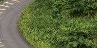 Road, Nature, Vegetation, Green, Mode of transport, Grass, Road surface, Asphalt, Lane, Infrastructure,