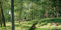 Nature, Vegetation, Natural landscape, Natural environment, Plant community, Landscape, Leaf, Nature reserve, Woody plant, Forest,