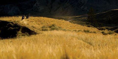Grass, Grassland, Grass family, Slope, Field, Savanna, Prairie, Meadow, Shrubland, Chaparral,