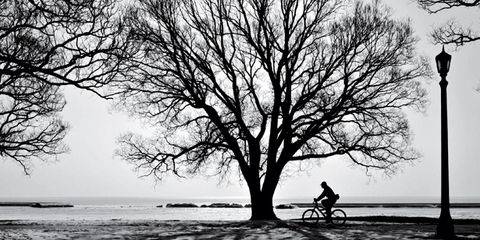 Bicycle tire, Branch, Bicycle wheel, Monochrome, Street light, Monochrome photography, Bicycle, Black-and-white, Bicycle frame, Bicycle wheel rim,