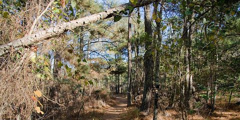 Natural environment, Branch, Plant community, Woody plant, Trail, Sunlight, Forest, Nature reserve, Biome, Woodland,