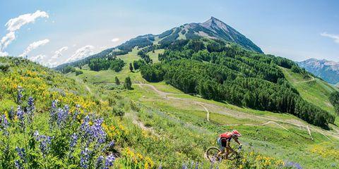 Natural environment, Plant, Mountainous landforms, Plant community, Flower, Hill, Wildflower, Mountain, Grassland, Meadow,