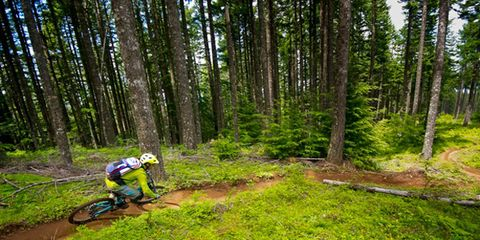 Vegetation, Natural environment, Plant, Helmet, Plant community, Soil, Forest, Bicycle clothing, Woodland, Trail,