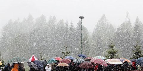 Winter, Street light, Freezing, Atmospheric phenomenon, Snow, Evergreen, Precipitation, Frost, Conifer, Fog,